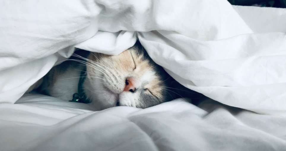 best pillows for side sleepers cat sleeps under a blanket with a smile